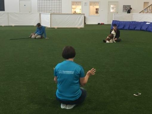 Hundträning i innehall