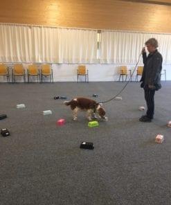 2021 är det dags för stora sommarlägret för hundträning i Skövde