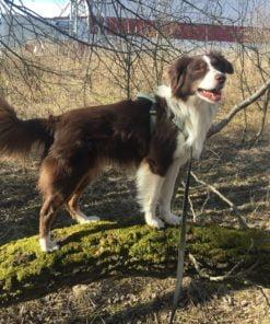 Dogparkour kan tränas i Skövde