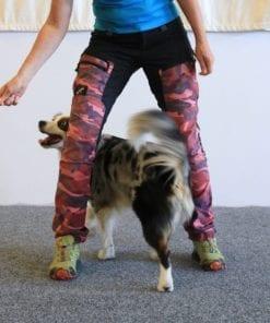 Freestyleträning med hund