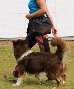 Lydnadsträning med hund