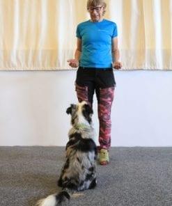 Hundar tränas på Positiva hunden
