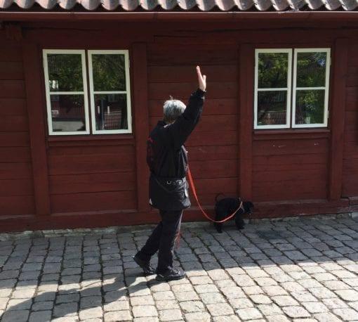 Nose work är nyttig träning för hundar