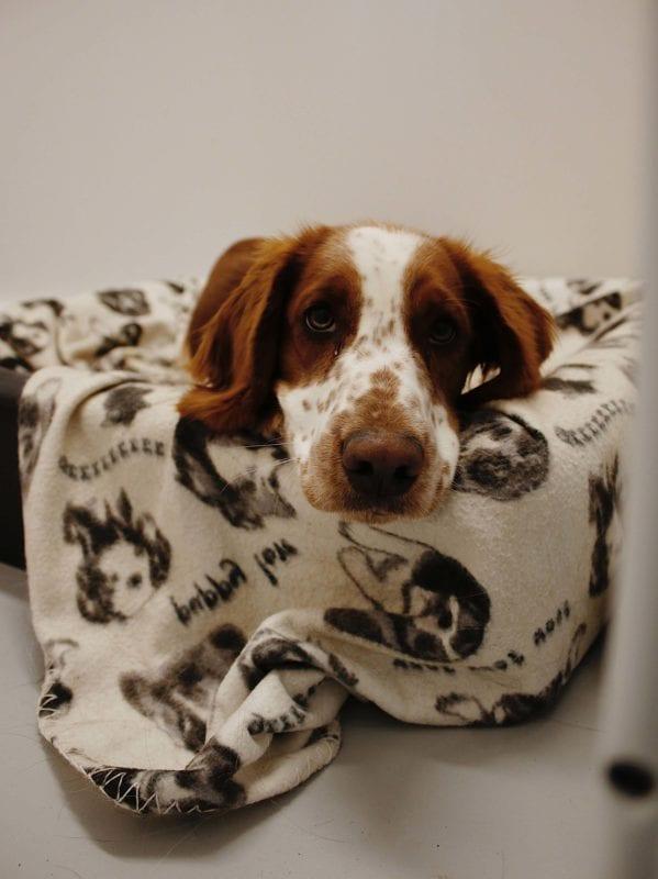 Hunddagis i Skövde hos Positiva Hunden