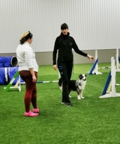 Grundträning i agility för hund