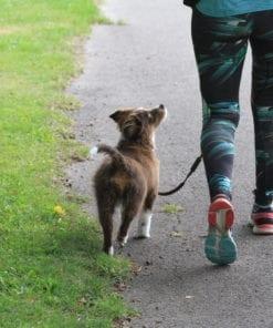 Du behöver lära dig att bli en bra ledare för din hund